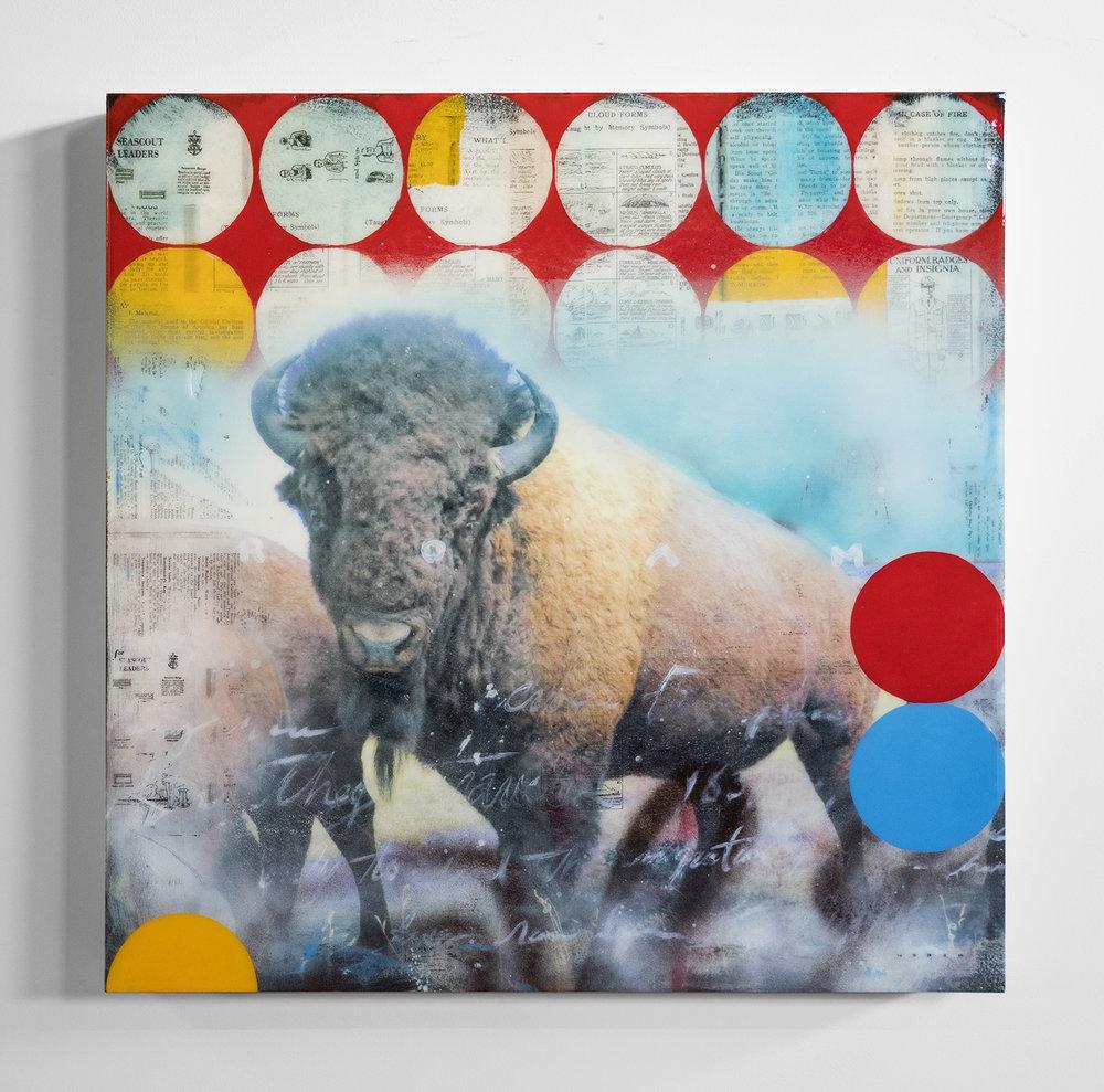 Buffalo Roam.jpg