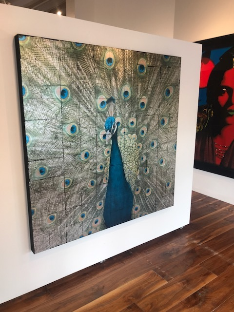 PEACOCK EDITION IN 60 X 60 X 3. IMAGE COURTESY OF THE LA JOLLA GALLERY