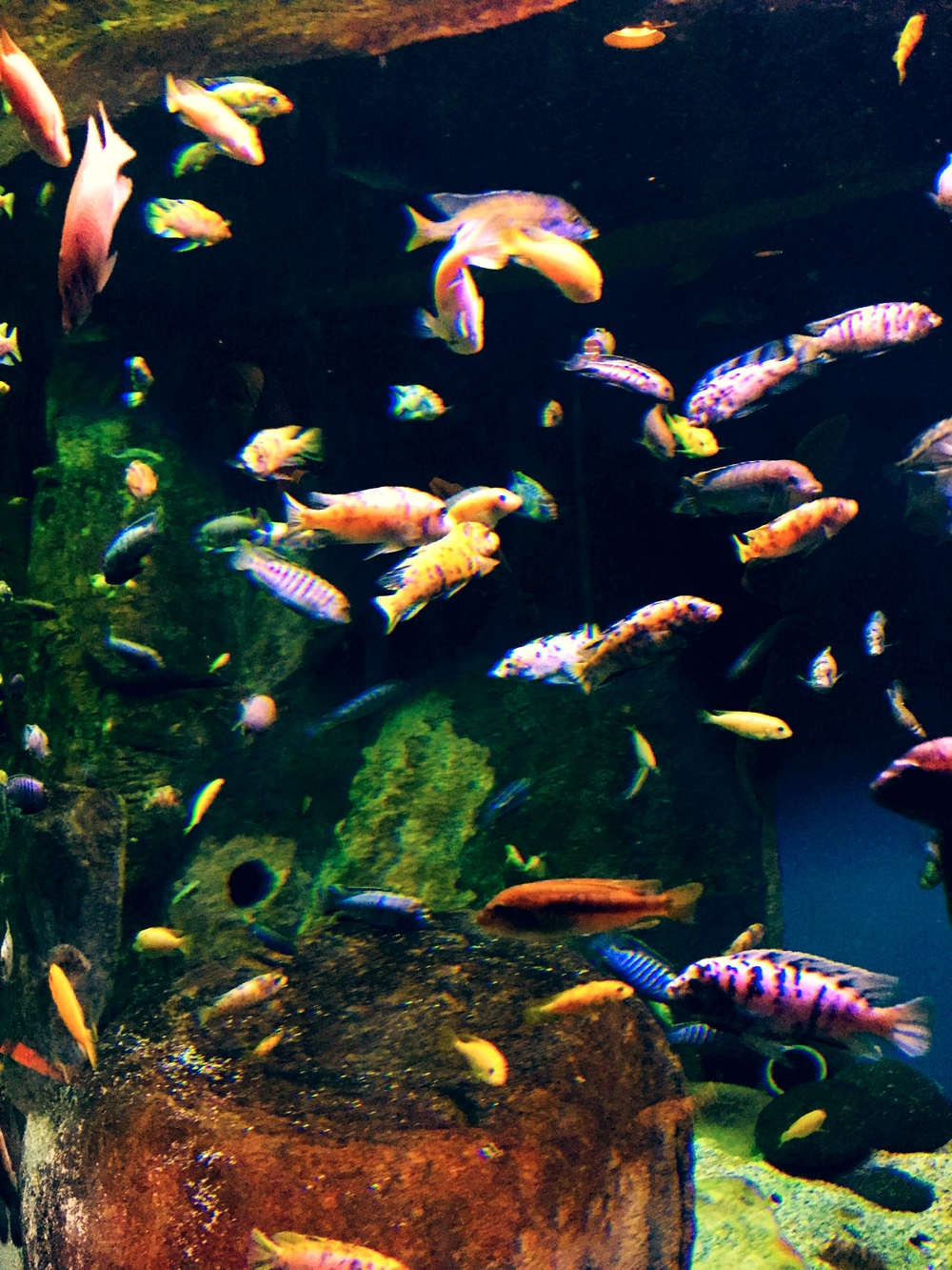 Tank of fish! The clown fish is here... somewhere. During the summer the aquarium is free from 4:00-5:00pm on Fridays