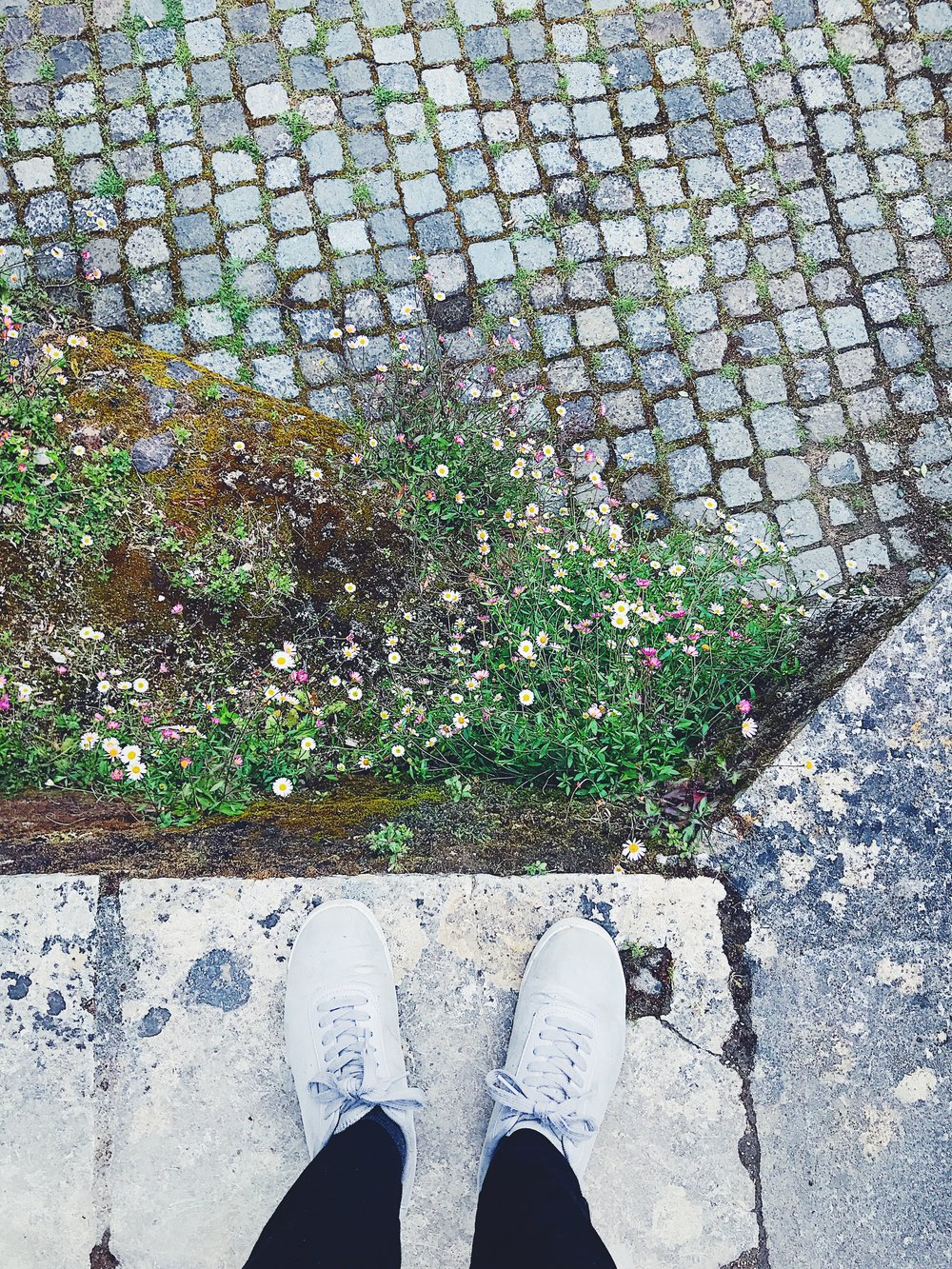Sintra garden