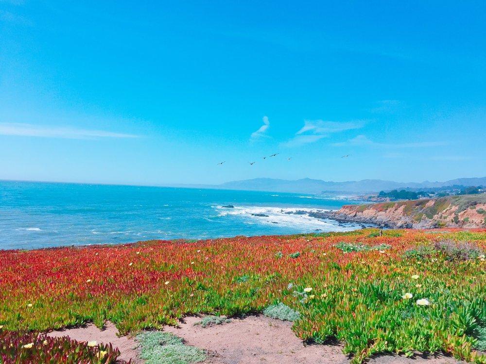 Fiscalini Ranch - Bluff Trail (Monterey Bay Aquarium Marine Sanctuary)