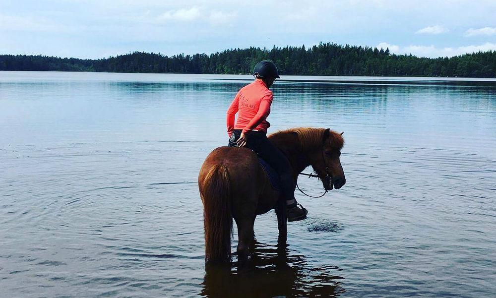 Islandshäst på tur