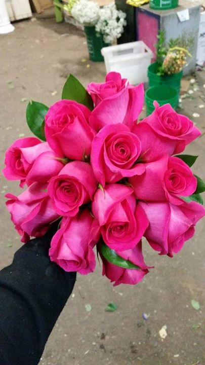 Pink Roses, also comes in a wide variety of other colours.