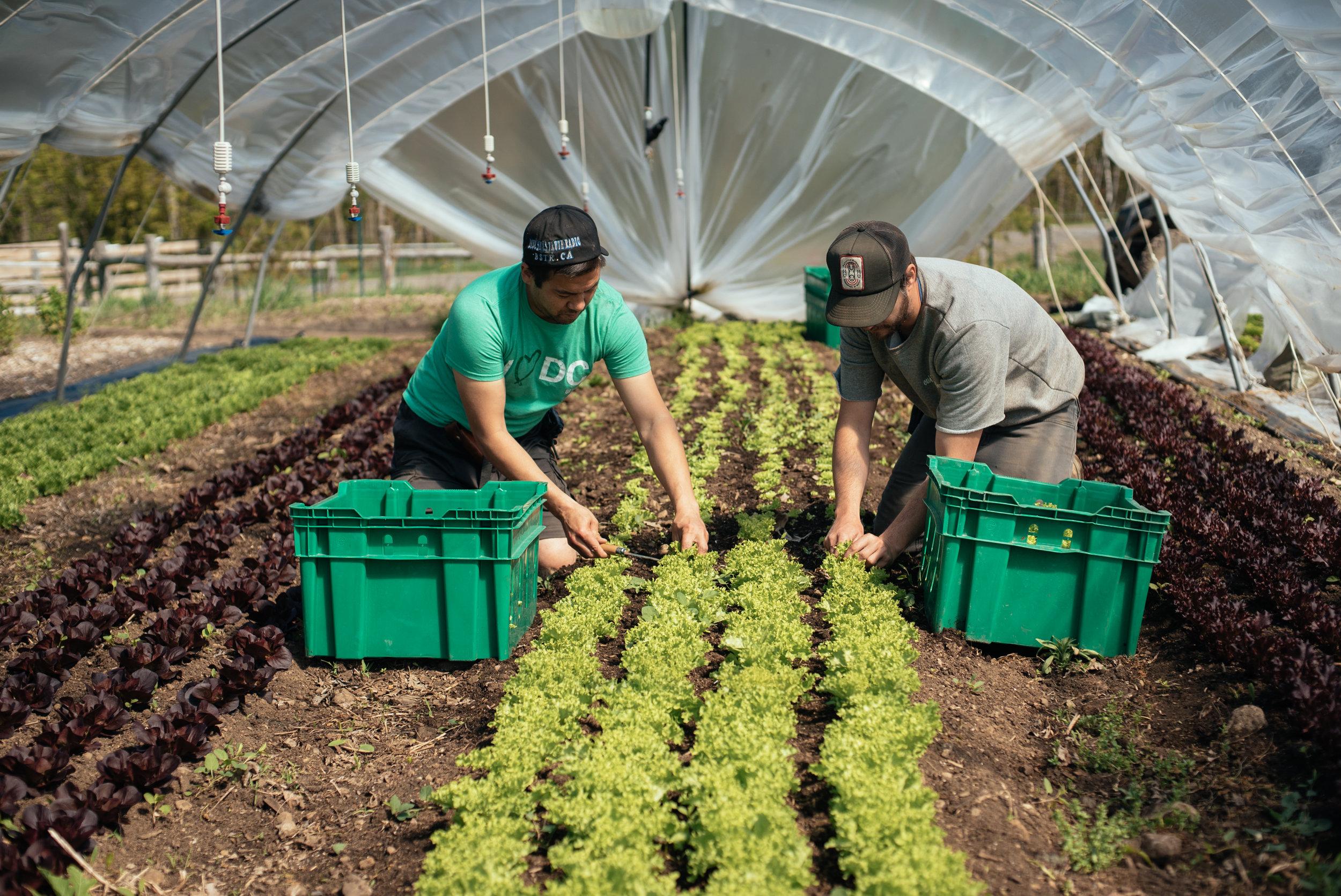 Etonnant Seattle Area, WA | 2 Day Training, Market Gardening 2.0 U2014 The Market  Gardener