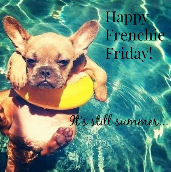 summer-frenchie