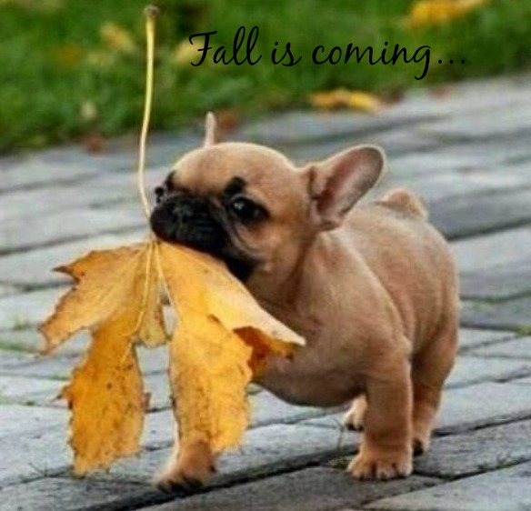 fall-frenchie