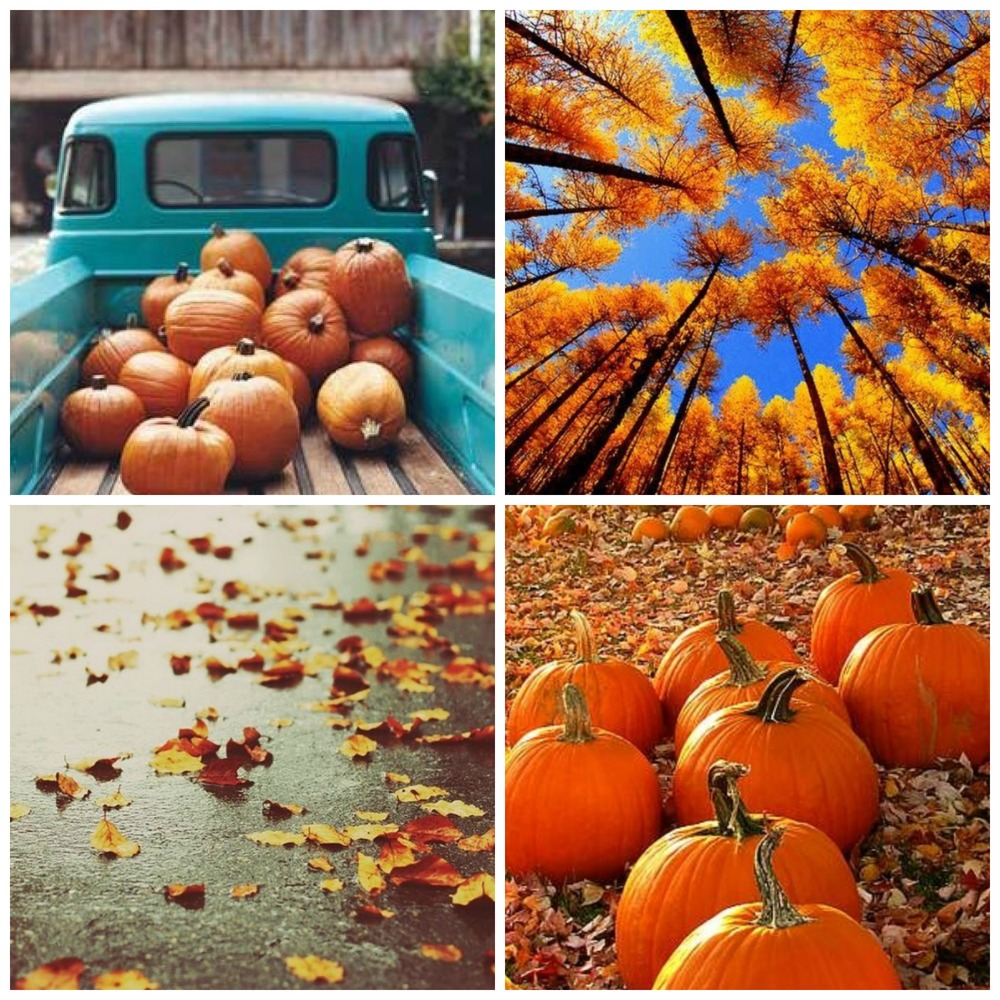 pumpkin-collage
