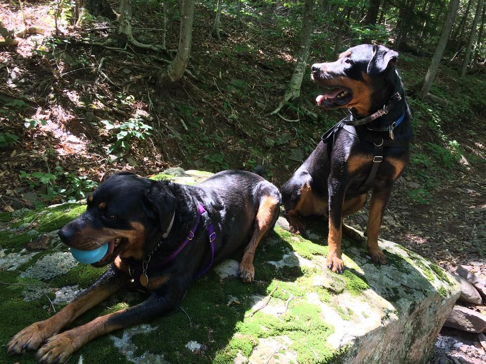 Layla & Bruno