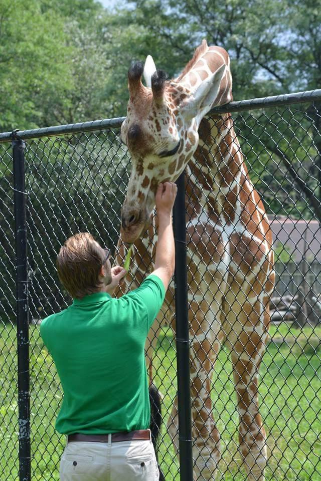 Matthew Valiga, feeding a giraffe