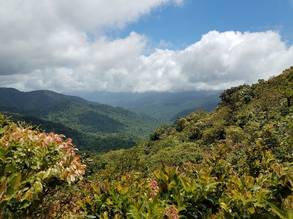Continental Divide, Cloud Forest Reserve