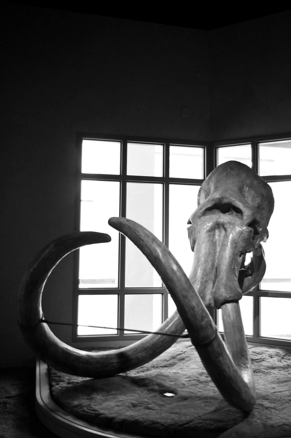 Objects-Fine-Art-Photography-Jay-Lansford-016.jpg