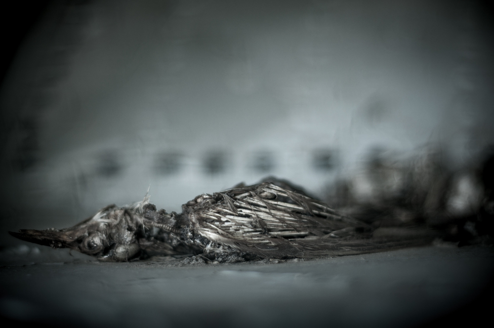 Decay-Fine-Art-Photography-Jay-Lansford-013.jpg