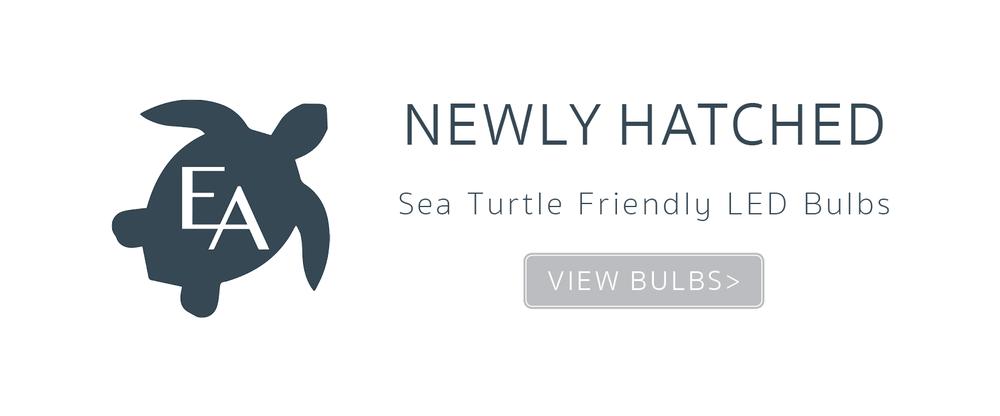 Turtle Bulbs_NewlyHatchedSlider.png