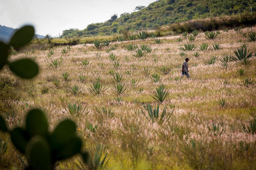 Maguey Farmer, San Baltazar, Mexico