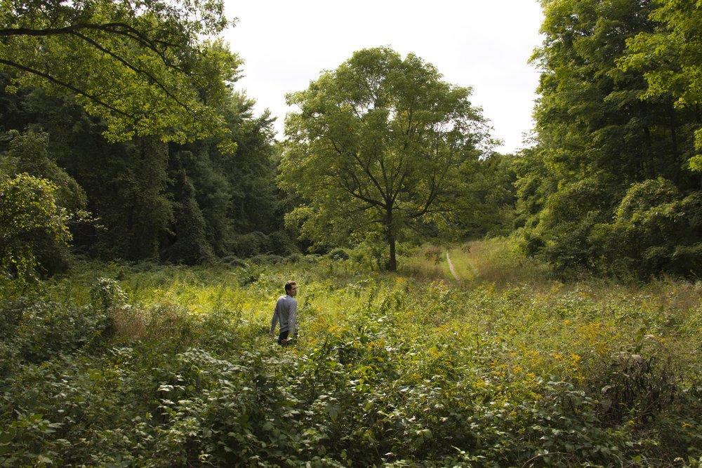 In the Wild (I)
