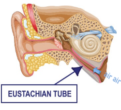 Diagram of the Eustachian tube