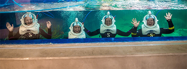 team building, OdySea Aquarium wetsuit and SeaTREK helmet and get ready to dive in!