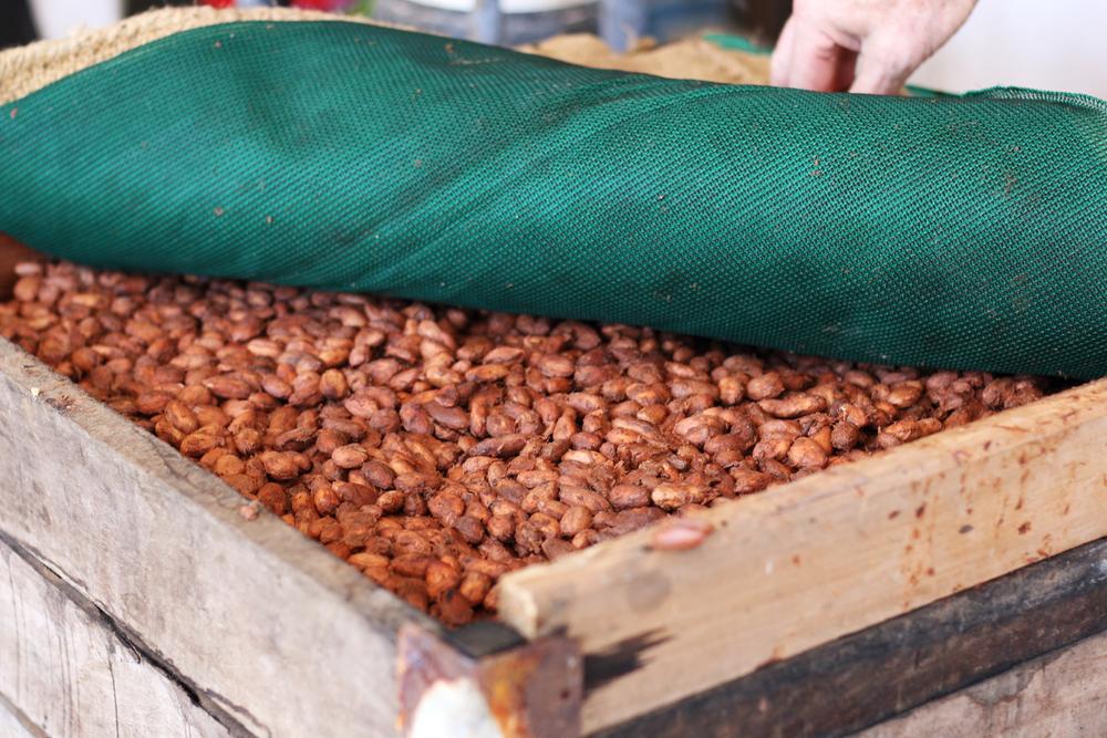 beans fermnt.JPG