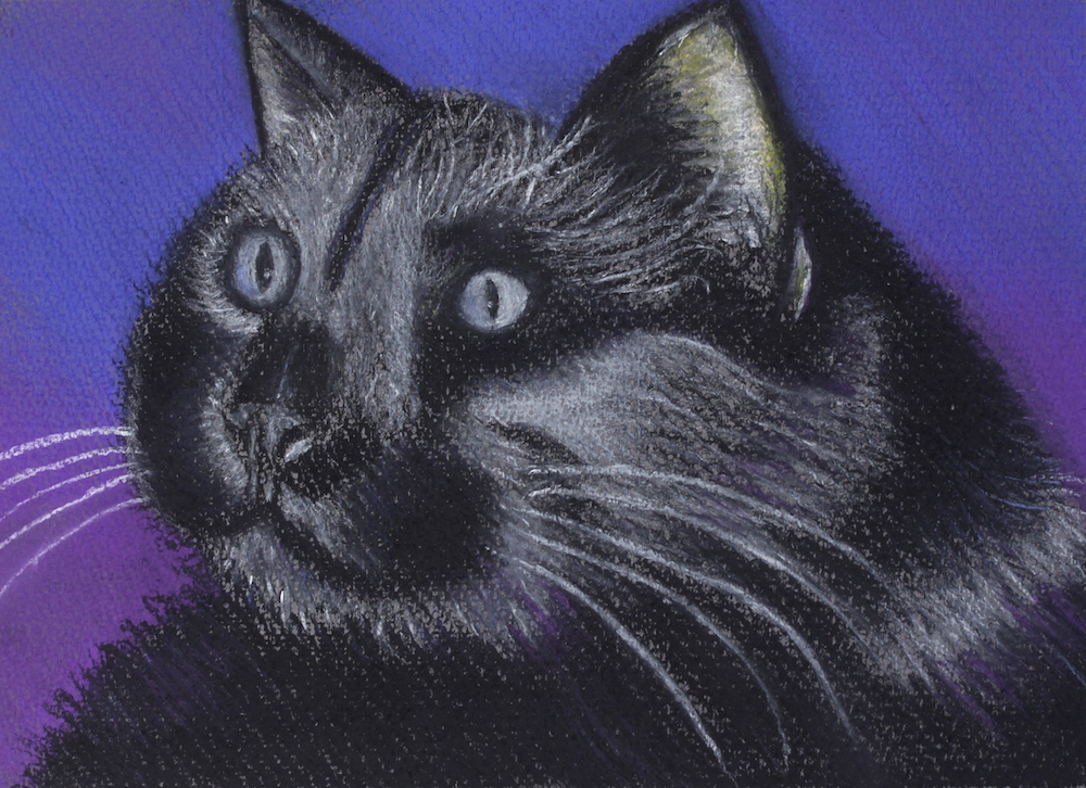 Black Cat, 2013, pastel on paper, 42x30cm