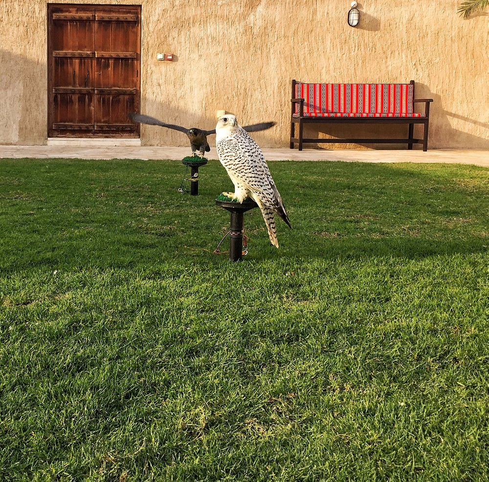 Falconry Tour in Old Dubai.jpg