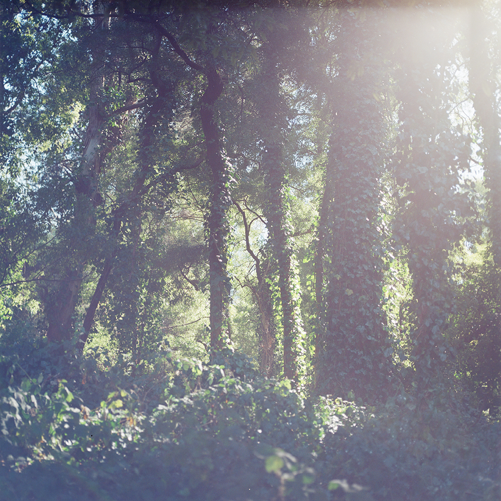 KodakPortra400NC (7).jpg