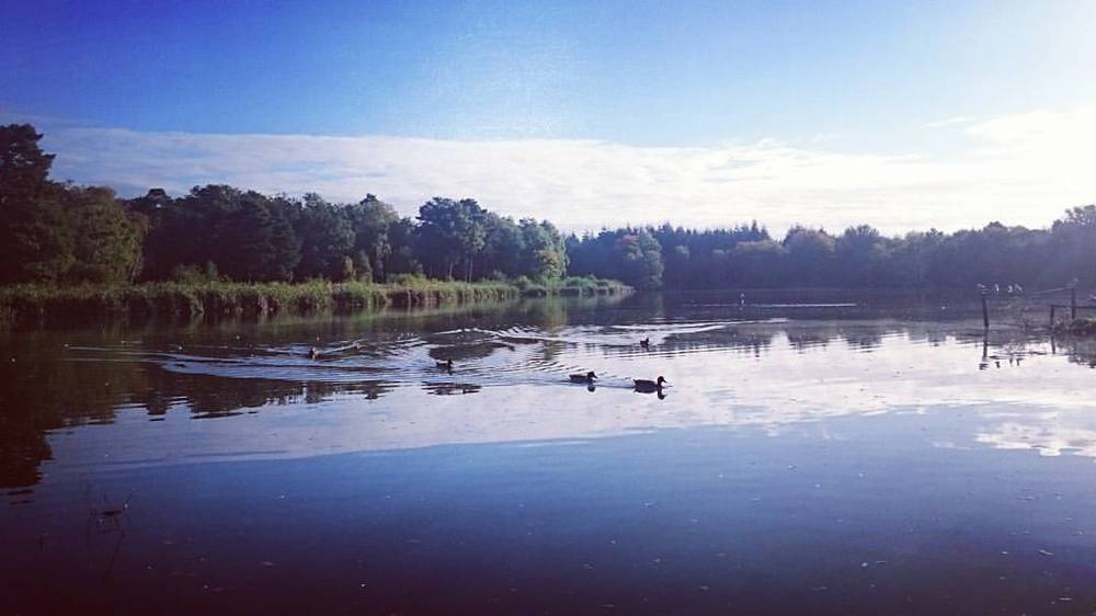 Morning world! #VSCOcam #vsco #landscape #reflection