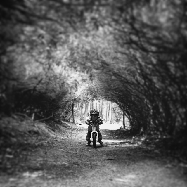 #VSCOcam #treetunnel #balancebike #son #forest #trees