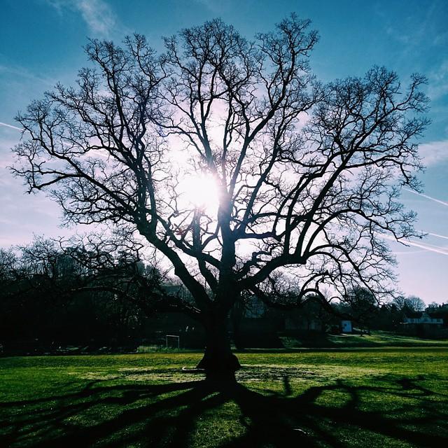 #VSCOcam #tree #spring #sun #sky
