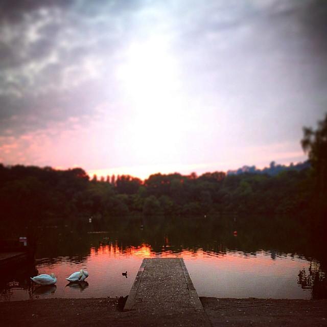 Red sky at night…….. #sunset #devon #decoy #lake #trees