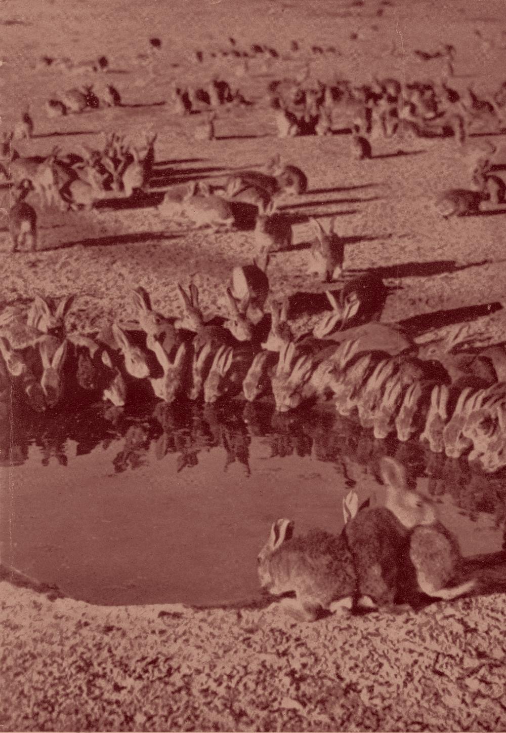 1938 Expérience à Wardang Island.