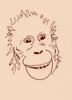 Sourire d'un jeune orang