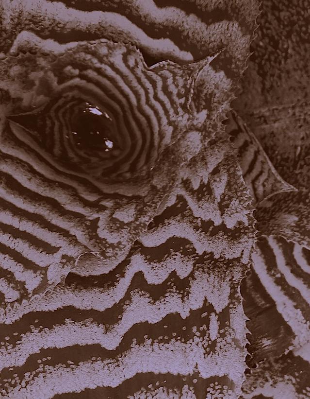 L'oeil était dans la tombe et regardait Caïn. Victor Hugo.