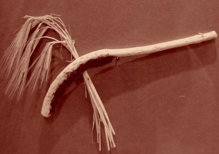 Faucille pour couper le blé, du temps d'Ötzi