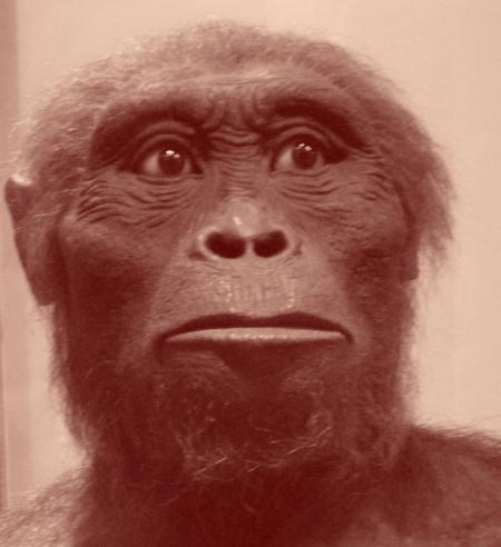 Australopithèque : prévision à l'envers