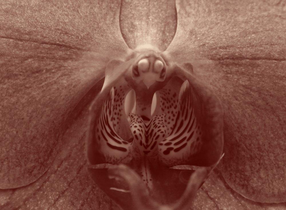 Cette fleur trompe l'insecte pollinisateur, qui la prend pour sa femelle. Orchidée