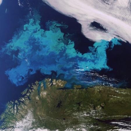 Au Cap Nord, les algues planctoniques prolifèrent à la belle saison.