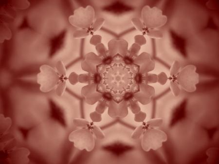 Fleur de cerfeuil sauvage, un peu photoshopée, qui tapisse nos fossés en ce moment.