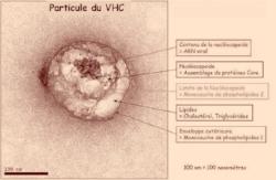 Le virus se cache en quelque sorte dans une molécule lipidique !