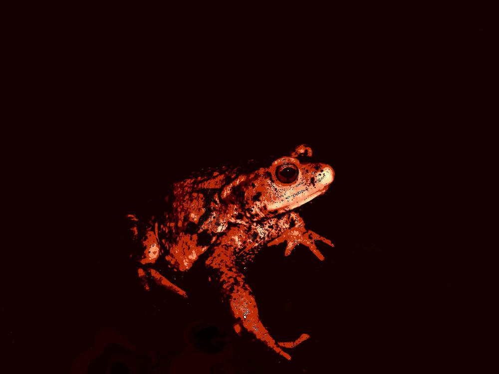Amphibien. Deux vies, une dans l'eau, l'autre dans l'air. En voie d'extinction, deviendra donc Abien, sans vie, juste numérisée en souvenir. Tout se coalise contre eux : le rayonnement UV modifié par notre couche d'ozone menacée , la disparition de leur habitat, l'effondrement de la biodiversité, les molécules pesticides, et même l'appétit français pour leurs pattes arrières.