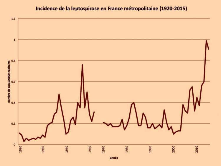 """Les cas de leptospirose humaine,  la maladie des rats, sont en augmentation. Document de l'Institut Pasteur. L'incidence de la maladie au cours des deux dernières années a atteint 1 cas pour 100 000 habitants, incidence la plus élevée depuis 1920 en France. Cette maladie était répandue chez les poilus, """"la néphrite des tranchés"""", la promiscuité avec les rats était effroyable."""