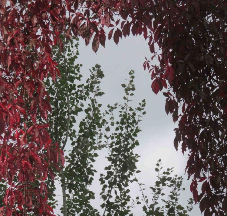 A chaque feuille son automne