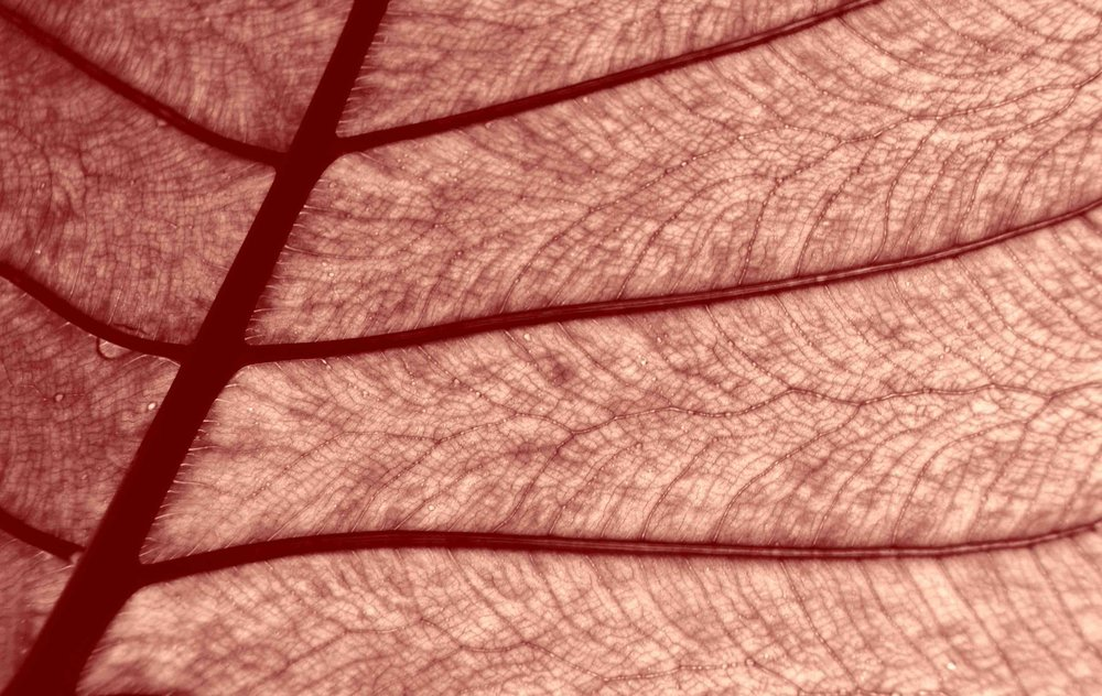 Rouge foliacé