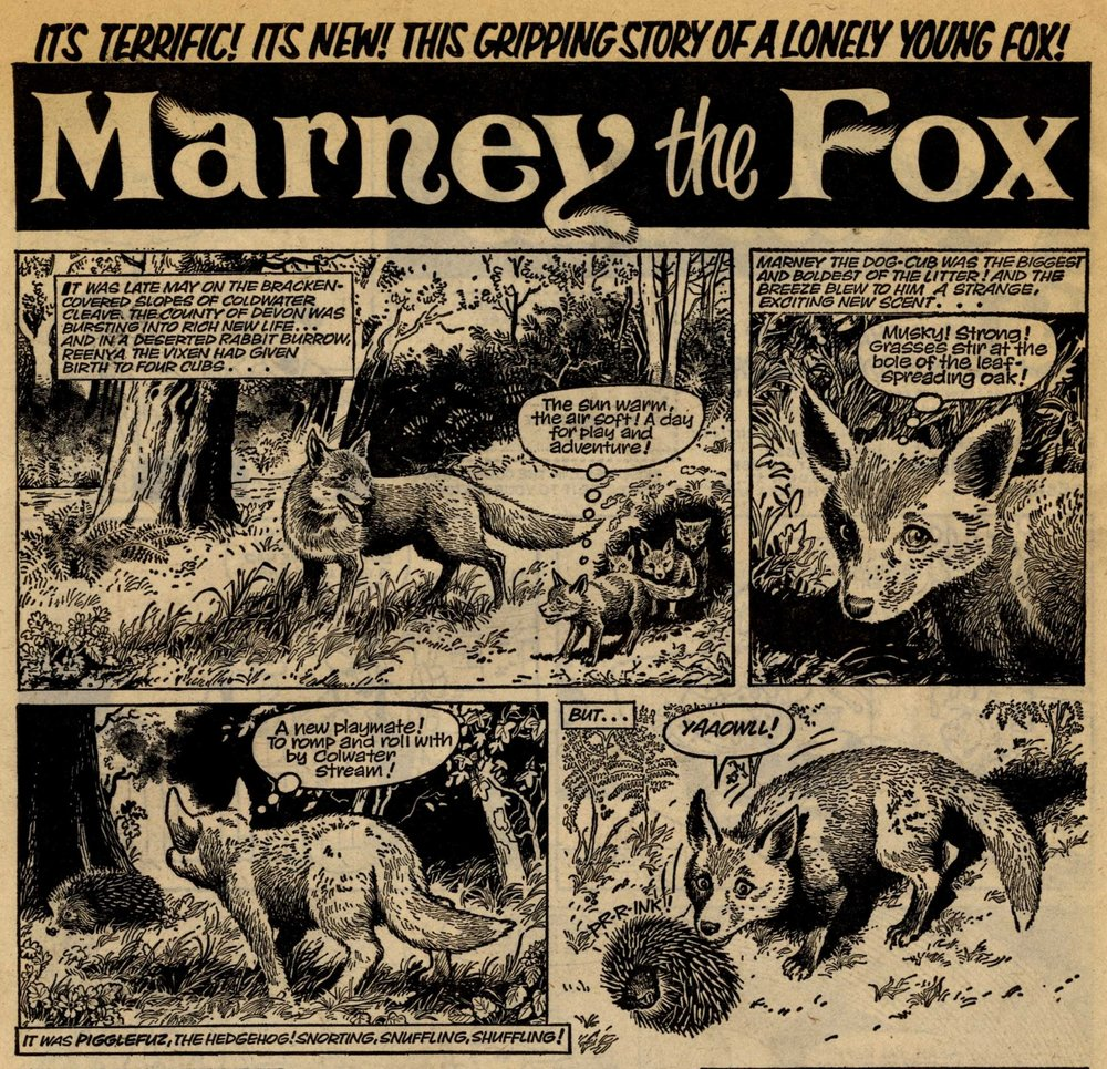 Marney the Fox: Scott Goodall (writer), John Stokes (artist)