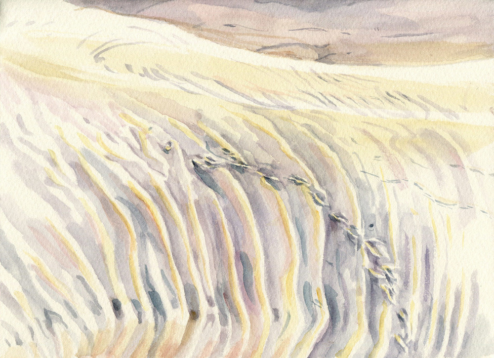 Field Studies (Thurra River Dunes, Croajingolong National Park), watercolour on paper, 18cm x 25cm, 2014