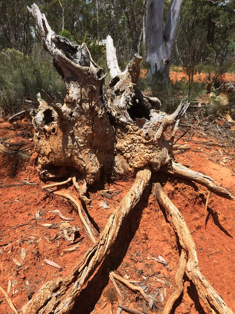 one of many dead or uprooted trees, which appeared expressive, almost human, in their twisted forms