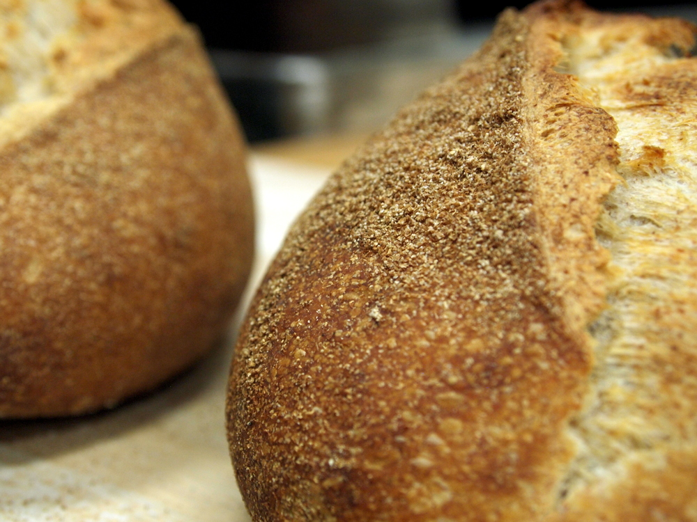 Brazen Day Loaf . Sourdough loaf made with Maine Grown, Sifted Whole Wheat Flour, Whole wheat flour and a touch of whole grain rye. A light and versatile table or sandwich bread.