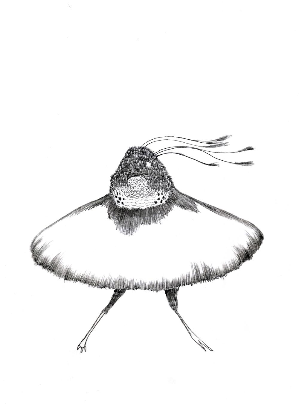 Fancy Bird, drawing