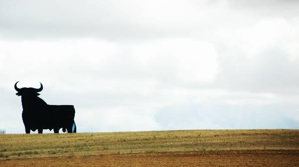 spanish-bull-spain_a__1613.jpg