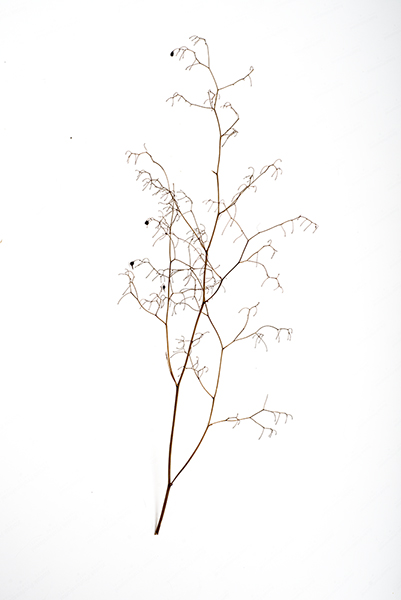 My twig, this was about a foot tall, found blowing around in the wind outside my house. I love this thing!