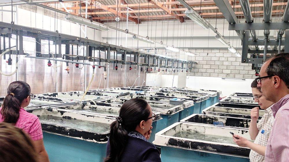 Acuicultura - Bio productos y servicios que permiten proteger a la industria acuícola de patógenos y detectar nuevas enfermedades, así como acompañamiento para oportunidades de diversificación.